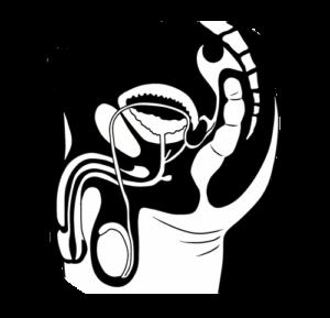 Bleistiftzeichnung Beckenanatomie Mann